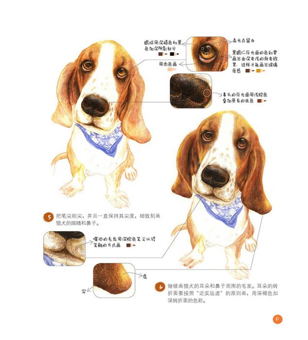 可爱小狗画法步骤