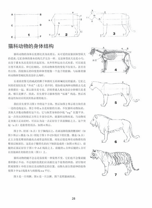 目  录 动物绘画基础知识  用7个连续的步骤画灰犬   提炼线条