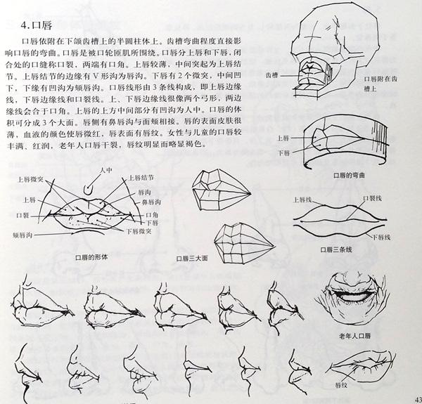 人体造型解剖