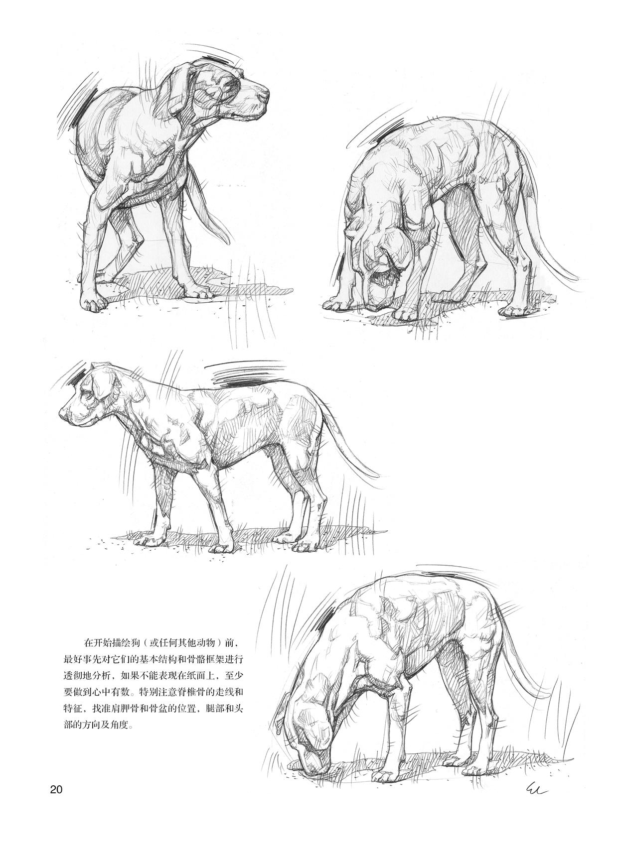 动物素描表现技法---意大利经典素描训练教程-w
