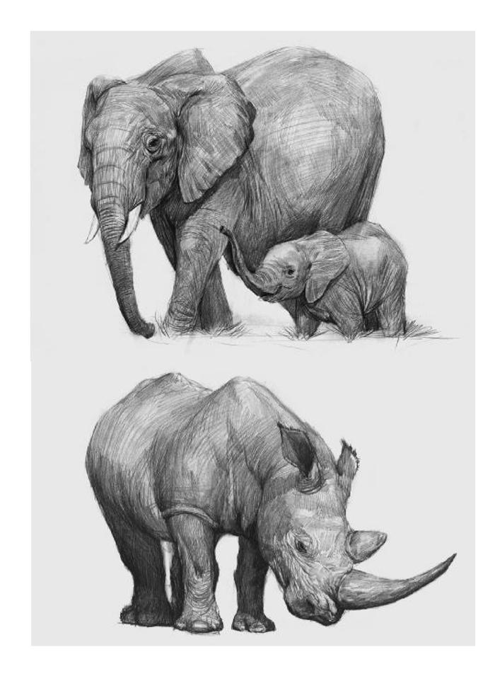 壁纸 大象 动物 700_955 竖版 竖屏 手机