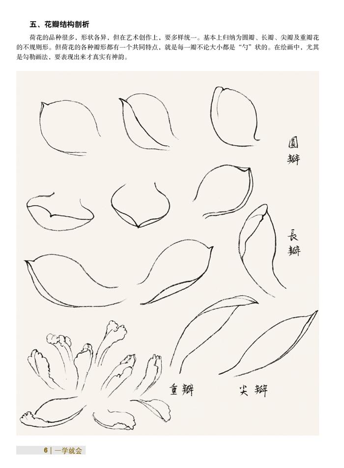 2,荷花的画法:换大白云笔蘸朱膘,曙红,笔尖蘸少许胭脂,边勾勒边染画出