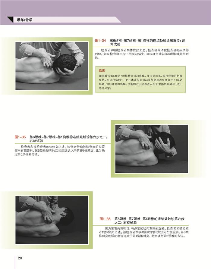 新版本中解剖学基本结构总图的特殊引进