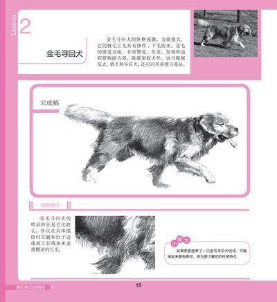 一日一画·素描——可爱动物价格(怎么样)
