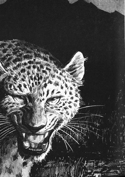《奇幻世界动物小说:神豹》((英)坎贝尔(campbell