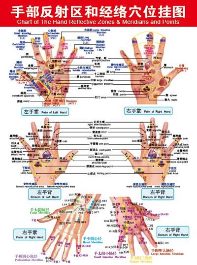 手部反射区和经络穴位挂图