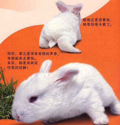 【小兔子】看小动物成长5:小兔子