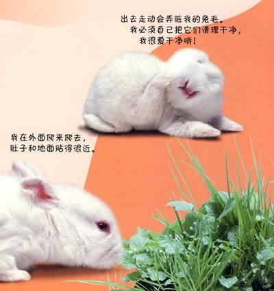 小动物带文字图片大全可爱