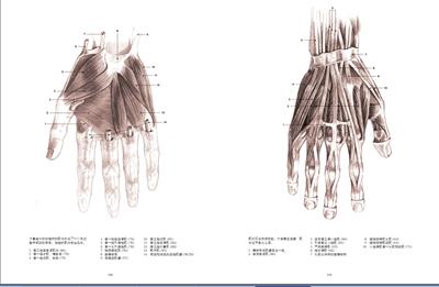 鼻子黎氏区解剖结构图解