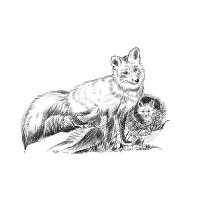 素描黑底动物头