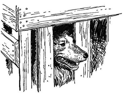 大卫鼻子素描步骤图