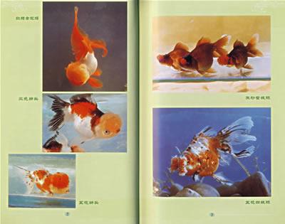 963942191_玛丽鱼生小鱼前兆,卡通小鱼,小鱼图片大全(第2页)_点 ...