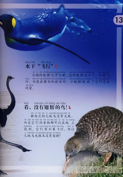 鸟类世界/动物小百科