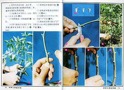 果树嫁接16法——实用农业科技彩色图说